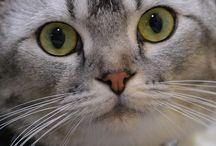 gatinho lindo / eu amo gatinho