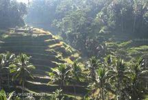 Beautiful Ubud Bali / Ubud, the centre of art and culture of Bali welcomes you, and for complete experience....
