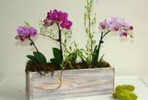 Rustic Flower Pots / Old looking flower containters