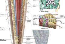 rastlinne organy