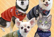 Rasy psów - małe psy w małych ubraniach