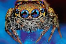 Örümcekleri hiç böyle gördünüz mü