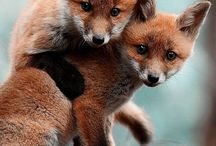 keep calm and love foxes