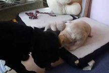 Kutyáim, My dogs