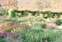 Garden engagement session at San Ysidro Ranch / Style and inspiration board for a garden engagement session at San Ysidro Ranch.  / by Jen Rodriguez