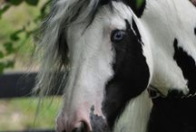 horse looks cool