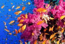 Coral marino rosa