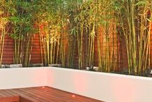 Garden Ideas - Bamboo