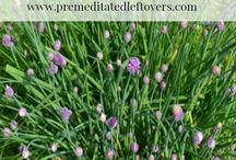 Growing Organic to Save