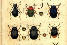 Insects illustrations