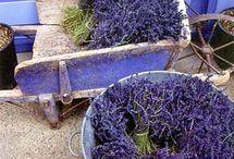 Provence-Lavendel-zonnebloem en div