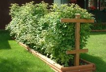 let's build a garden :) / by Katie Spain