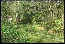 Recreation & Trail Riding