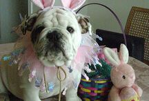 What's For Easter (2014)? / Some Easter ideas for your dogs and cats for Easter 2014!