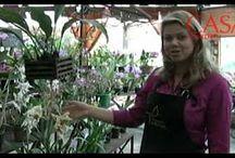 Fazendo a orquídea florir