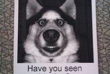 Dog comic