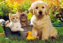 Pets! / All about pets!
