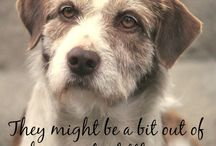 Old Dog Quotes / Heart-warming, inspirational, funny.... Old Dog Quotes that you'll love!