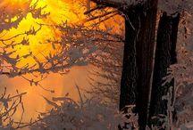 Foto - Winter