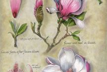 Botanical flowers, plants