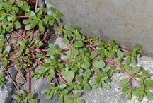 plante qui soigne