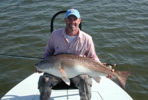 REDFISH / Fly fishing for redfish or red drum.  Redfish on the fly.  Red drum on the fly.