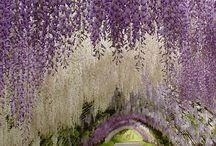 'cause it's purple!!!