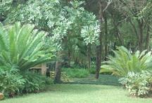 Broodbome, Palms en Bome