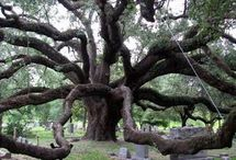 arbrebizz