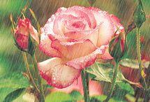 gif flores