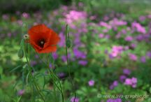 Beautiful World of Flowers / Naturfotografie - die Welt der Blumen