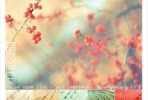 Haken: kleuren bonbon