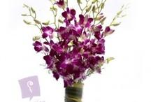 Elegance Of Orchids
