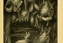 Page Frights! / Halloween, library and archives style. Join us as we celebrate #PageFrights by exploring frightening and/or Halloween-related images from BHL's collection. Learn more: http://pagefrights.org.