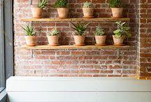 Trouvailles Pinterest: Les plantes / Chaque vendredi, nous vous présenterons ce qui nous a inspiré dans le monde fabuleux de Pinterest durant la semaine. Chronique sur un thème précis présentée par la photographe Marie-Claude Viola.