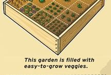 veg and herb garden
