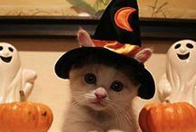 Halloween / Halloween Ideas / by Laura 727b
