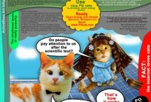 Cats Rule Web Infographics / Why do cats rule the web? How to use cats to rule Internet
