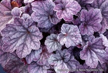 Plum Crazy / Shades of purple / by Rhonda S.