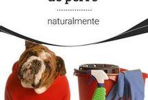 Cómo eliminar el olor de orina de perritos
