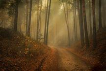 Fall / Photography