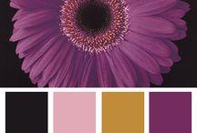 Gamas violetas