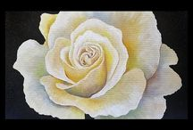 Roses a Beauty