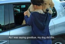 doggggsss