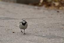Birds-野鳥-