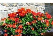 Para que tus plantas florezcan más seguido