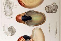 Planches naturalistes& botaniques
