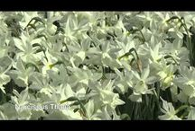 Video's by DutchGrown / Video's from www.DutchGrown.com we like to show our wonderful product.