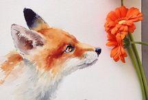 Fox/ Jakkals