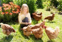 Raising hens / by Rosalie Hammond-Redenbaugh